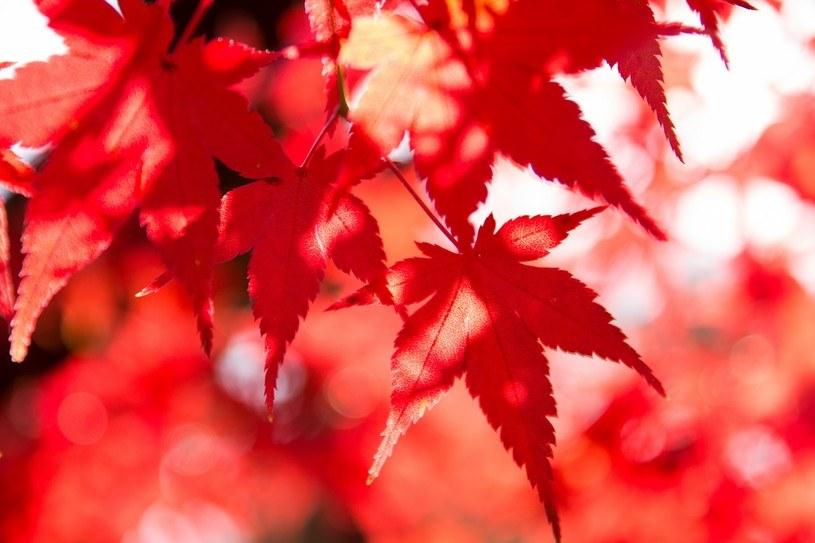 葉が紅葉する仕組みとは